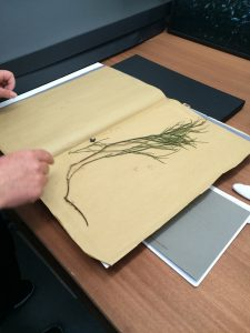 chrystels-herbarium